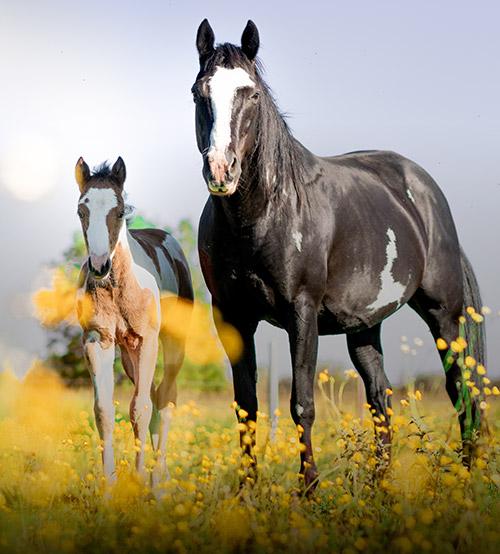 Centre equestre Baisieux
