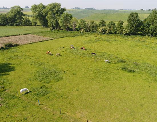 Equitation dans le Hainaut