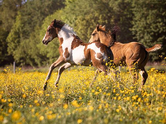Equitation classique dans le Hainaut