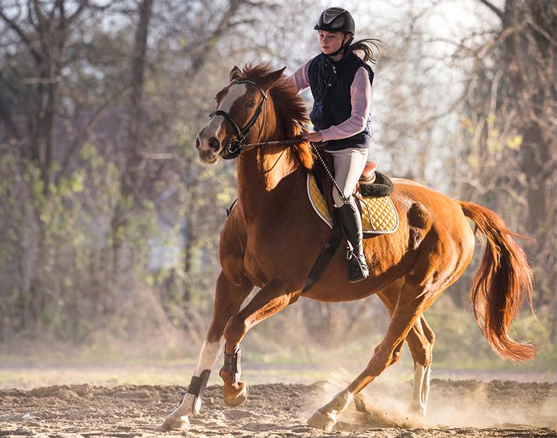 Entrainement de chevaux dans le Hainaut